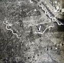 WW1 RFC / RAF Press Photo #1 - picture 5