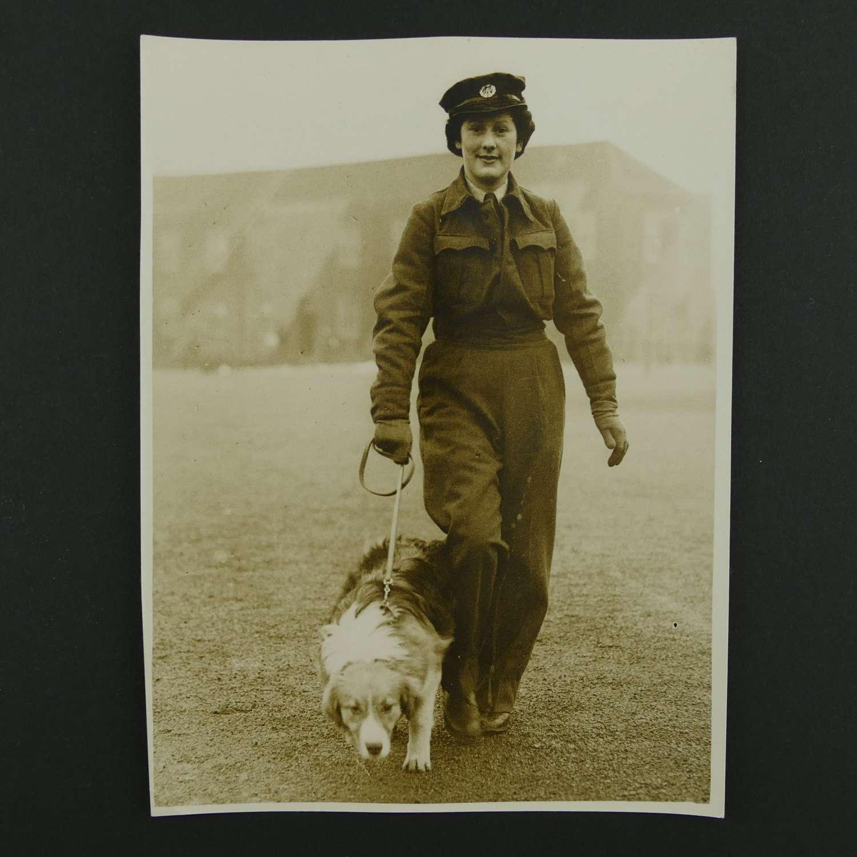 Press photo - WAAF member with dog